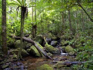 Planet Earth 2 – Jungles – Sophie Gregson